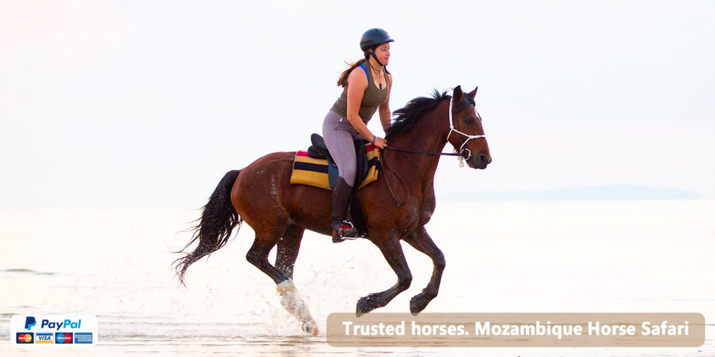 Horses of Mozambique